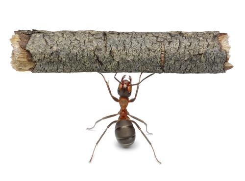 ant-shutterstock-66243361-WEBONLY